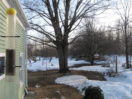backyard21.jpg