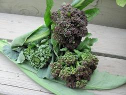 violetqueen
